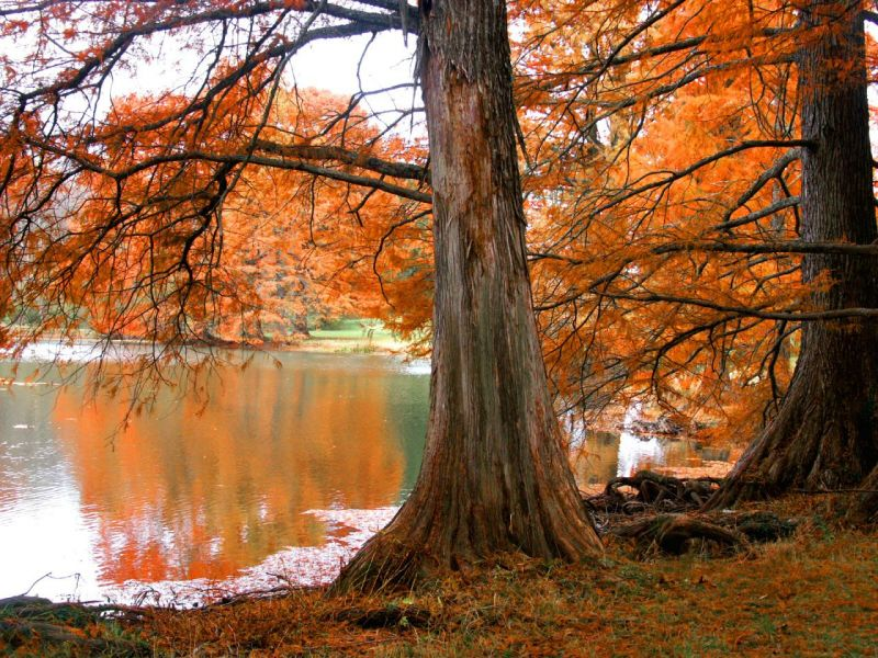automne002.jpg