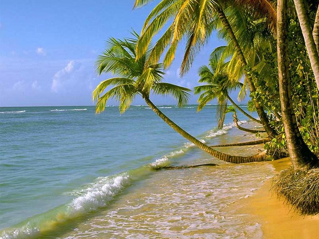 palmiers02.jpg