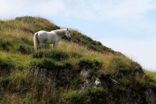 chevaux-de-dublin