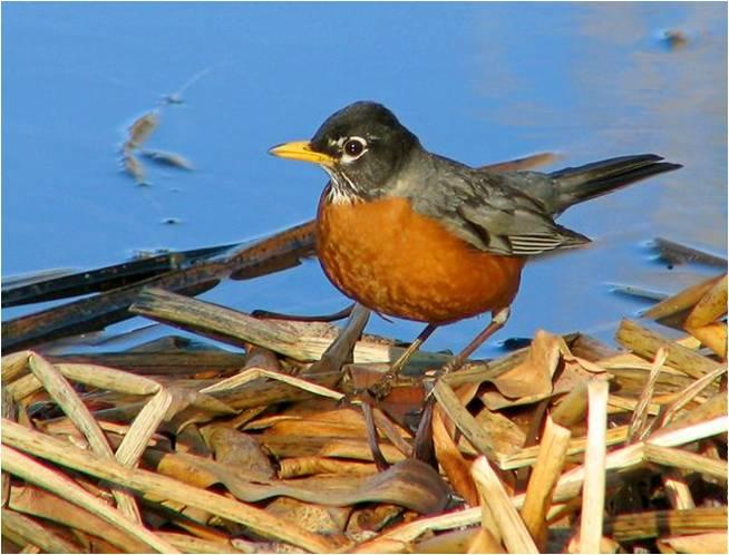 L'ESCLAVE ET L'ENFANT oiseau