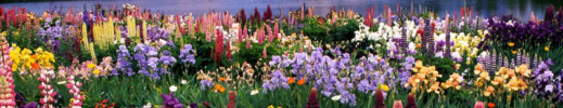 MONTAGNES..Fleurs