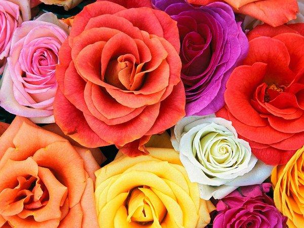 fleurs differentes cop